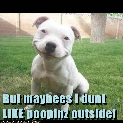 dogs poop cute outside - 7829602816
