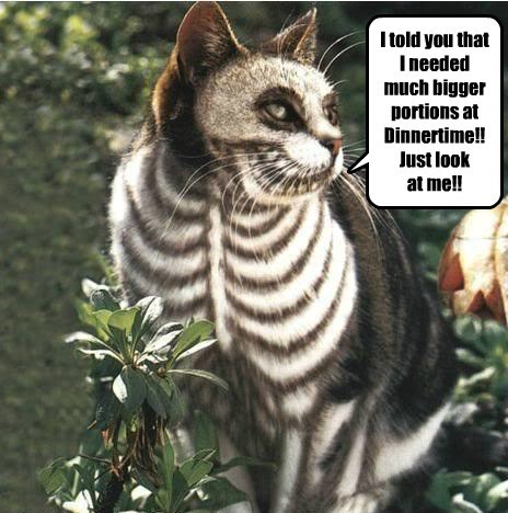 costume halloween skeleton Cats - 7829616384