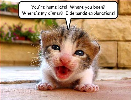 kitten in charge cute damand - 7829643776