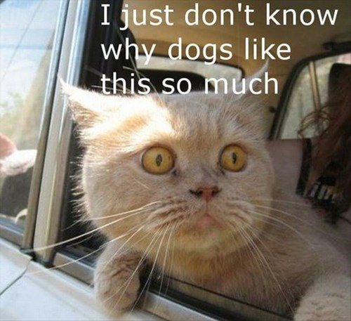 dogs riding in cars Cats - 7829672704