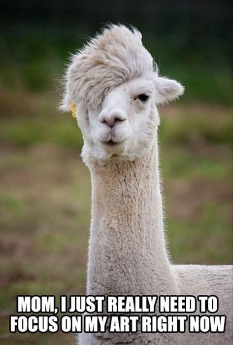 emo llamas alpacas - 7829686528