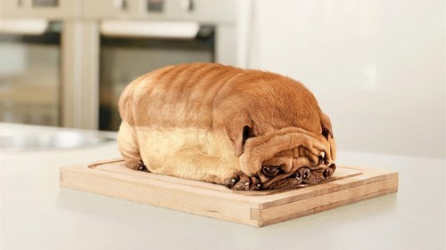 pugs bread weird - 7829692416