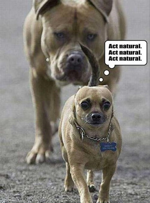 big dogs bully scared little dogs - 7829702144
