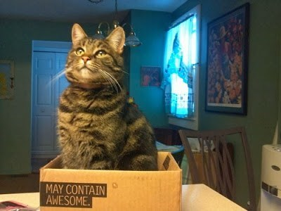 box awesome Cats - 7829747712