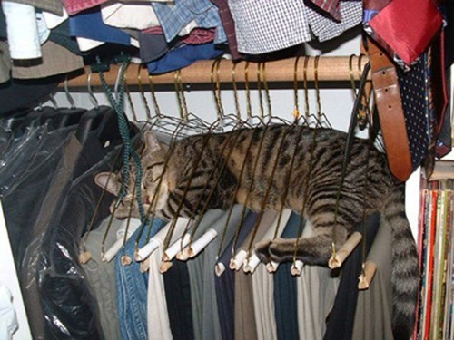 lint roller,clothes,Cats,sleeping