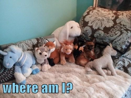 dogs stuffed animals camo hidden
