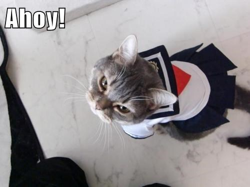 costume halloween sailor Cats