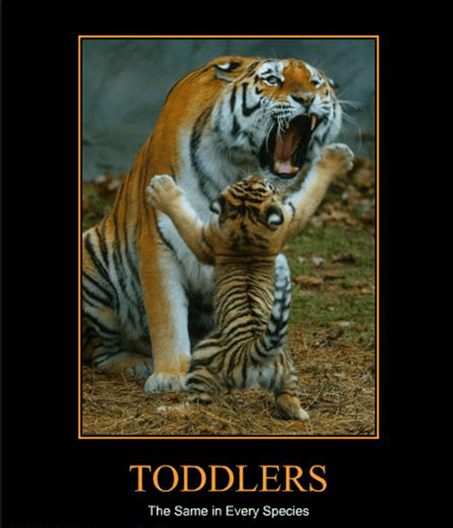 annoying kids tiger funny - 7830084096