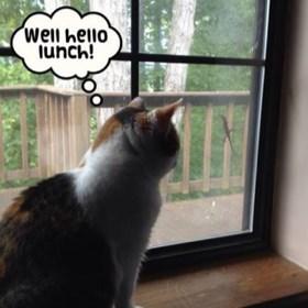 lizards lunch Cats hunt - 7830451712