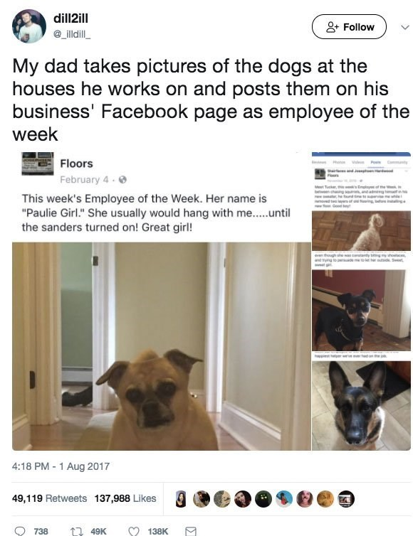 contractor posts pics of customer dogs and cats
