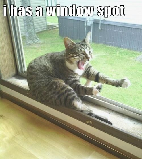 window seat Cats flying - 7831381760