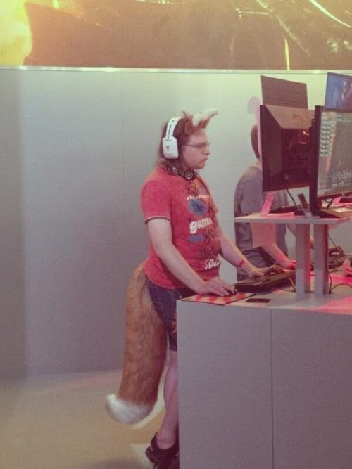 fashion,Tech,furry,fox