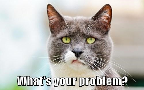 picture Cats what's your problem - 7831648512
