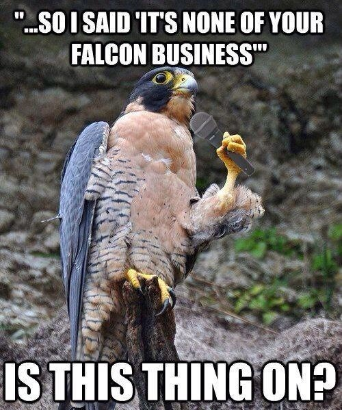 falcon funny animals - 7831780096