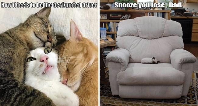 funny cat memes lolcats funny memes funny cats Cats funny cat memes - 7831813