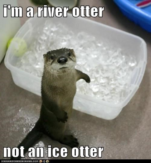 puns cute otters ice - 7831864064