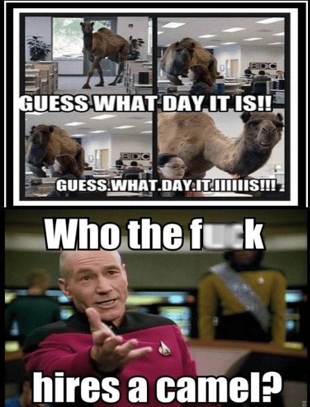 in this economy camels Star Trek funny - 7832167168