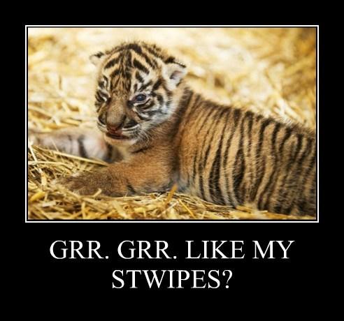 tigers cute cubs - 7832245248
