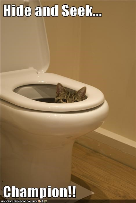 cat gross hide and seek champ toilet - 7832681472