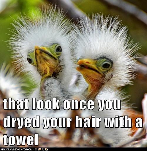 hair towel baby birds feathers spiked hair - 7832822528