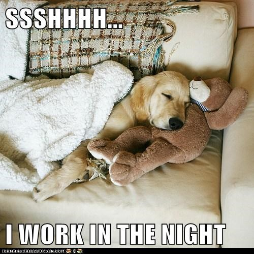 dogs nap work sleeping - 7833188608