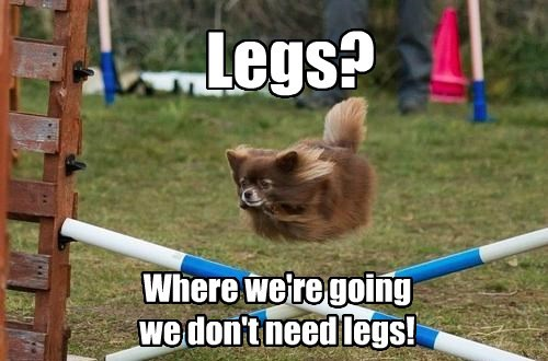 dogs back to the future legs flying - 7833194752