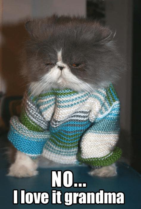 grandma sweater Cats funny - 7833280512