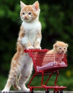 tuna kitten shopping food cart