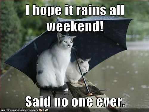 umbrella Cats rain - 7833452544