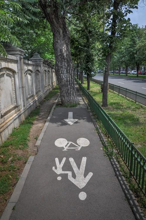 trees bike path there I fixed it - 7833517824