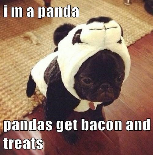 costume halloween puppies panda - 7833892864
