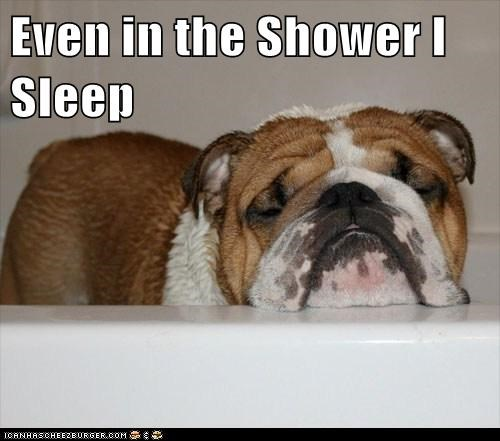dogs,shower,sleep