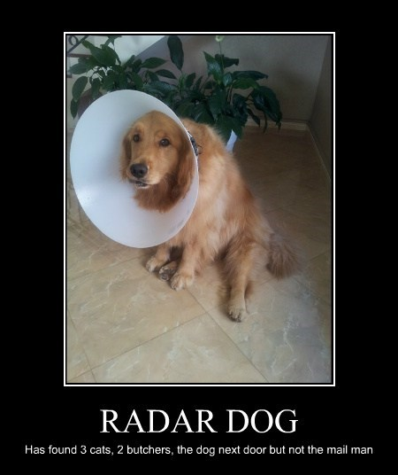 dogs,radar,cone of shame,funny