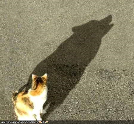 wolves shadow Cats