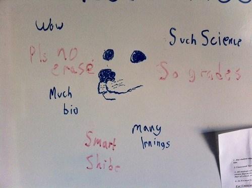 shibe,funny,white board