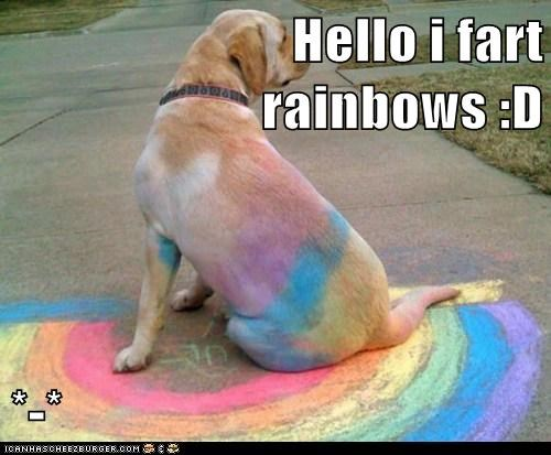 dogs,messy,rainbow,fart,chalk