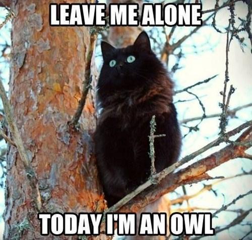 owls tree Cats - 7835150080