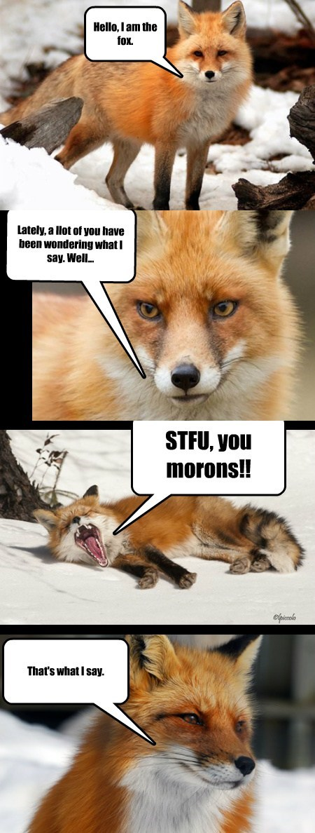 foxes response funny - 7835150848