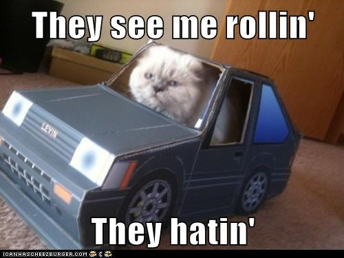 cute riding dirty Cats - 7835242752