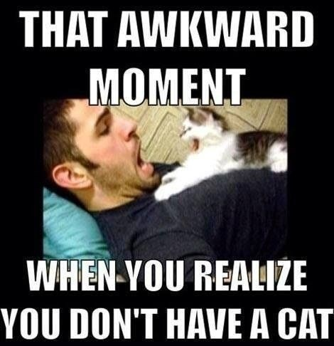 cat Awkward Moment surprise realize - 7835250944