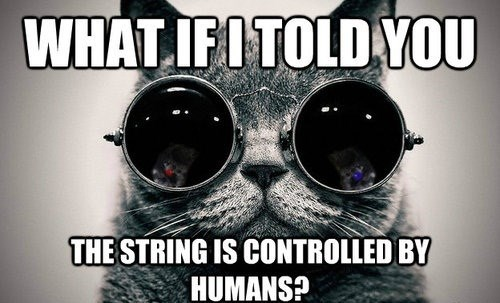 matrix,Cats,animals