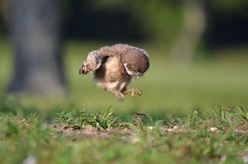 learn to fly birds cute owls - 7835366912