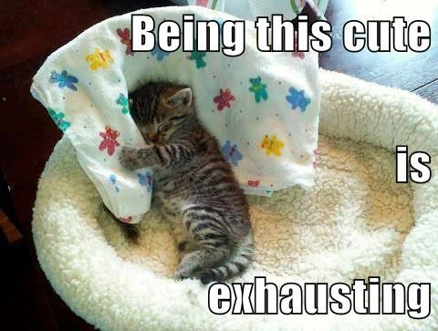 kitten cute exhausting - 7835907072