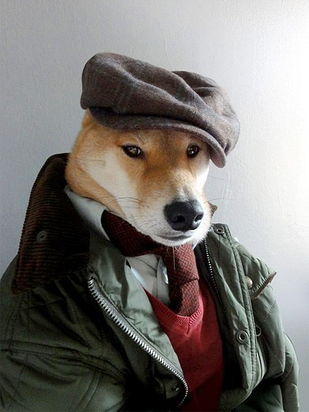 dogs,fashion
