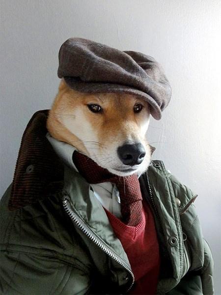 dogs fashion - 7836357632