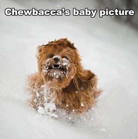 baby photo star wars chewbacca