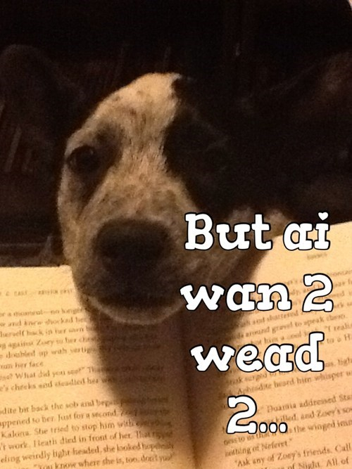 dogs reading cute lolspeak books - 7836492032