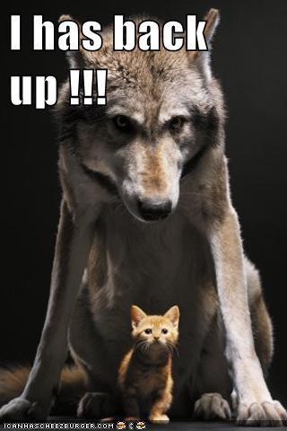 backup wolves scary kitten tough - 7836577280