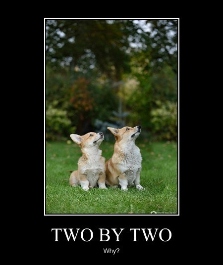 TWO BY TWO Why?
