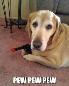 pew pew pew guns dogs funny - 7836702464